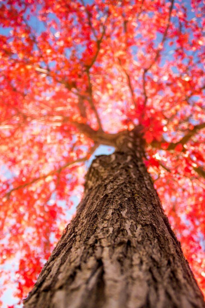 tree, trunk, fall-2834973.jpg